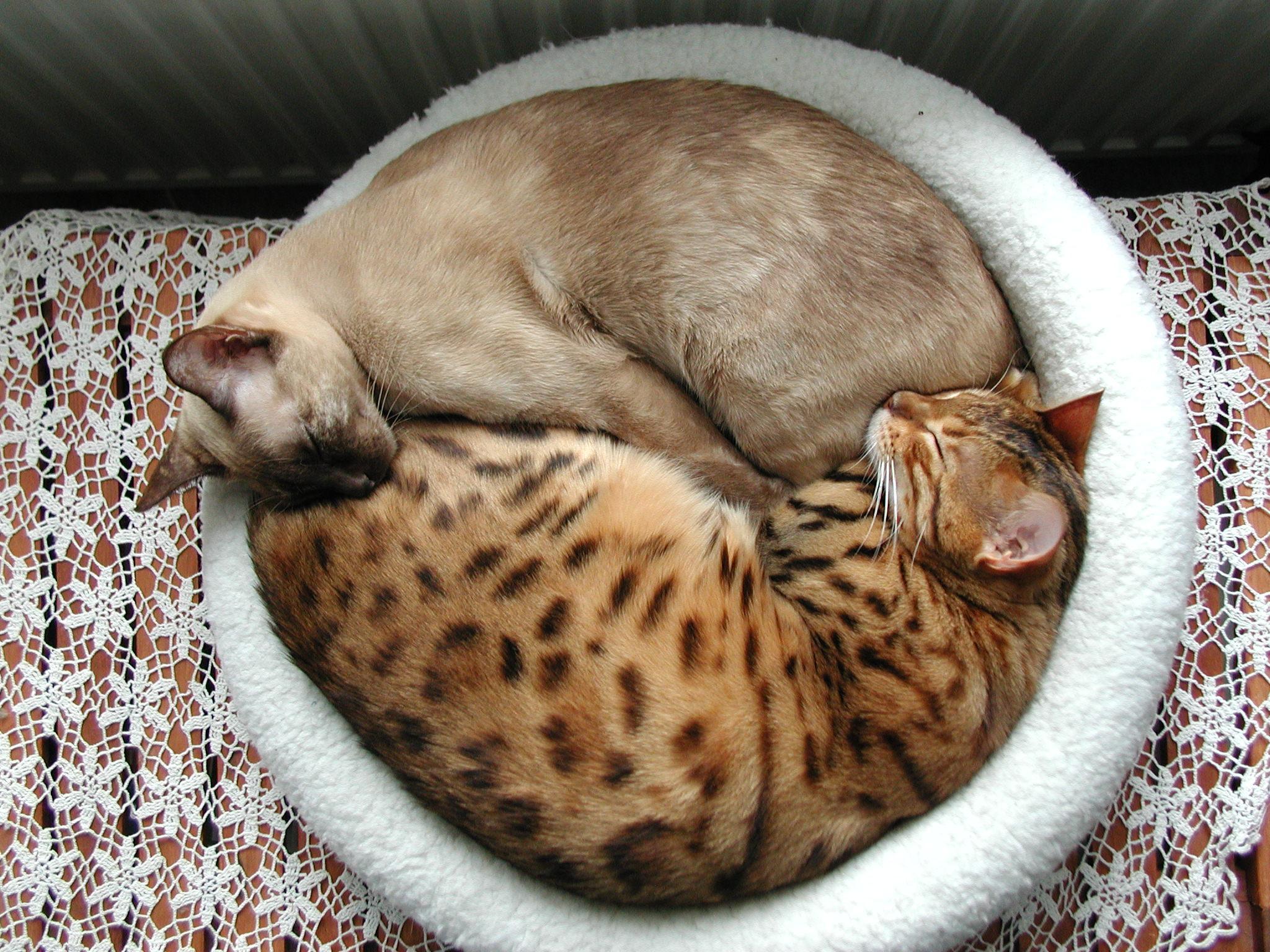 Eben mačička na mačička