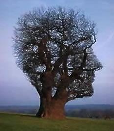Tvár stromu
