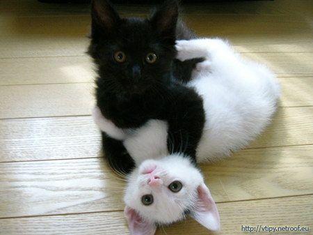 Eben príťažlivé mačička pic
